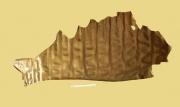 Lackleder, Gold, 0,74 m² zugfestes Täschnerleder, Rindleder (WT 089)